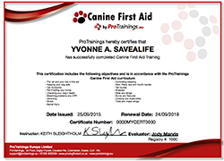 Canine First Aid  Level 2 (VTQ) Training and Test