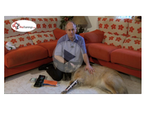 Pet First Aid Level 2 (VTQ) Videos
