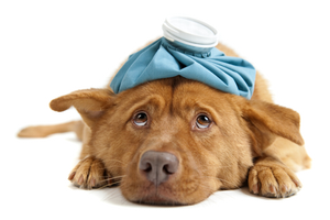 Assessing and treating pet illnesses