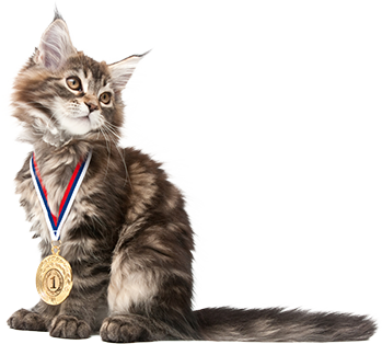 Cat with medal for completing Pet First Aid training course