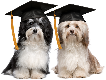 Graduating dogs that just learned pet first aid