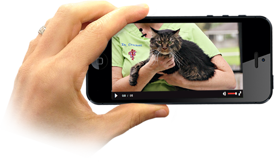 Cat first aid video on iPhone