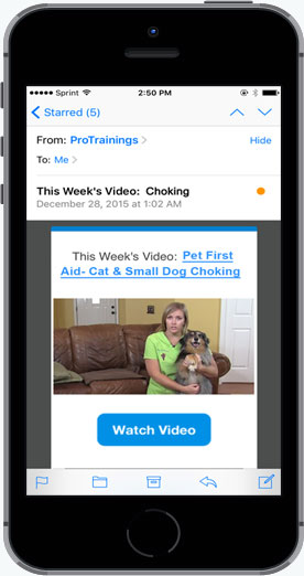 Pet first aid weekly refresher video in iPhone email inbox