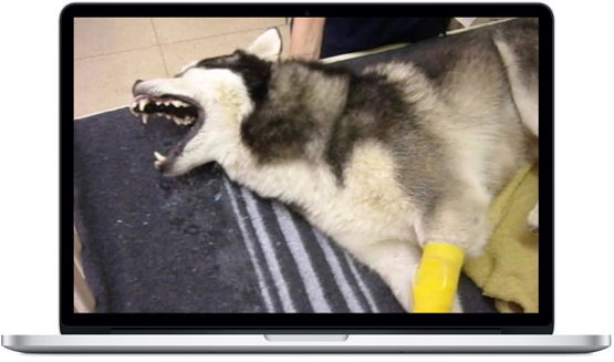 Laptop with image of dog having seizure